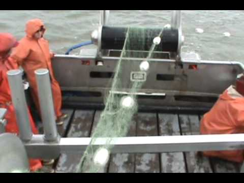 Commercial fishing with gillnet on bristol bay sockeye for What is commercial fishing