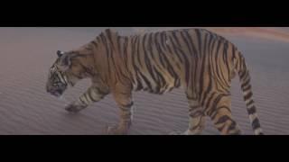 SabWap CoM Paranday Full Video Bilal Saeed Latest Punjabi Song 2016 Speed