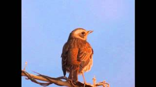 El Cant dels Ocells - (The Song of the Birds for piano and string orchestra)