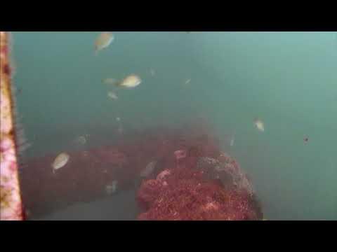 Sharks in the Atlantic Cam 05-25-2017 09:06:31 - 10:06:31
