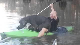 沈没寸前!カヤックに乗り込んだ飼い主が心配で一緒に乗り込んでしまったグレート・デーン。で重量オーバー