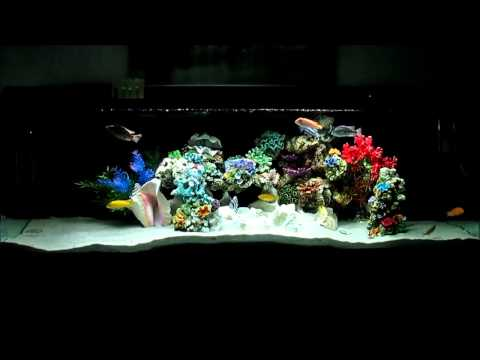 Nualgi Aquarium Product Review