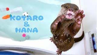 Otter Kotaro&Hana Fun Bath Time Activities