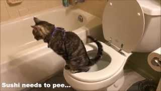 Squinty and Sushi Show 6: Sushi needs to pee, and needs a little help