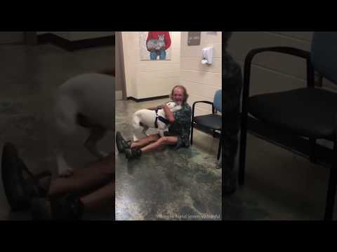 HOMELESS MAN REUNITED WITH LOST DOG