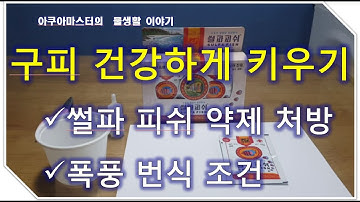 구피키우기/썰파피쉬 처방방법/썰파피쉬 수조별 용량 공개/구피폭풍번식조건