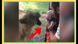Try Not To Laugh Animals - Funny Animal and Human Fails Videos.