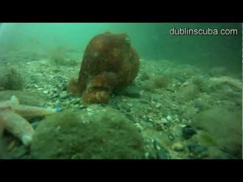 Dublinscuba spring diving