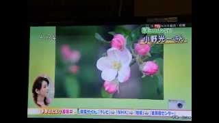 2014.5.14日放送.