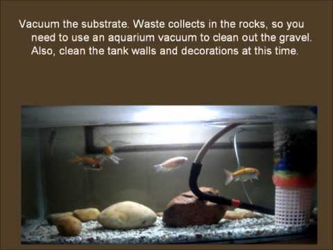 how to lower nitrate levels in your aquarium fish tank