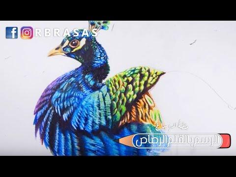 رسم طاووس بالألوان الخشبية Rbrasas Com Youtube