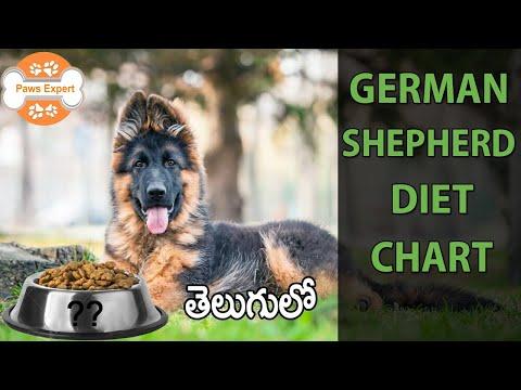 German Shepherd Diet Chart    In Telugu   