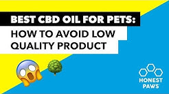 Best CBD Oil for Pets: 6 Ways To Avoid Low Quality CBD