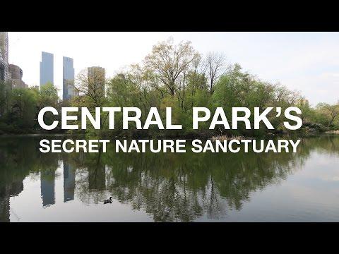 Secret Nature Sanctuary in Central Park | New York City