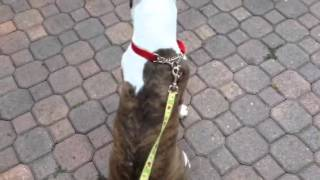 Expert Dog Training In Tampa: Dog Tags