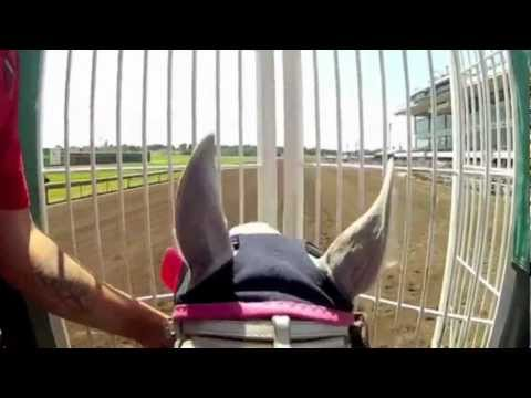 Quarter Horse Helmet Cam At Canterbury Park With Jockey Jeramie Fennell