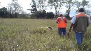 "Hunting English Springer Spaniel Rock River Rockin' The Field ""rocky"""