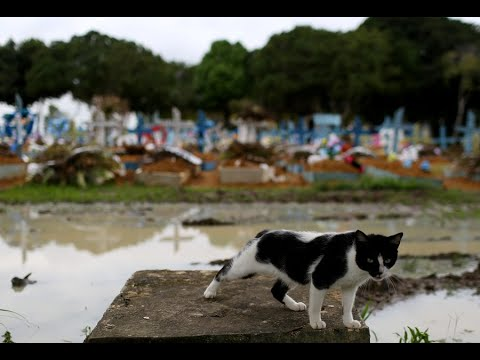 تضرر الآلاف في اكري البرازيلية جراء الفيضانات.. والرئيس يحلق فوق المناطق المتضررة  - نشر قبل 3 ساعة