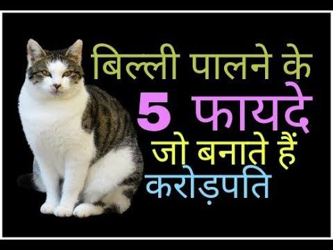 Cat Benefits बिल्ली पालने के ये फायदे जानकर पैरों तले से जमीन खिसक जाएगी