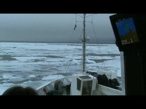 Dans la banquise Arctique