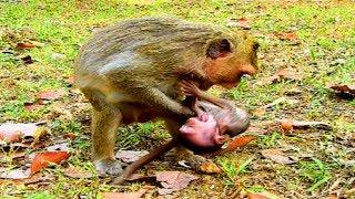 Cruel Mum Fight Her Poor Baby Monkey  TS184 Mono Pueblo