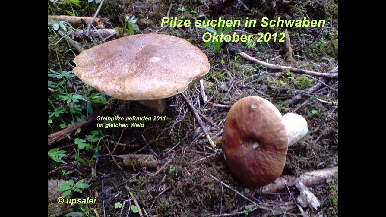 Pilze Sammeln Menge