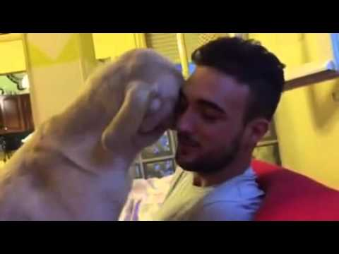 Dog apologizes for doing a bad thing