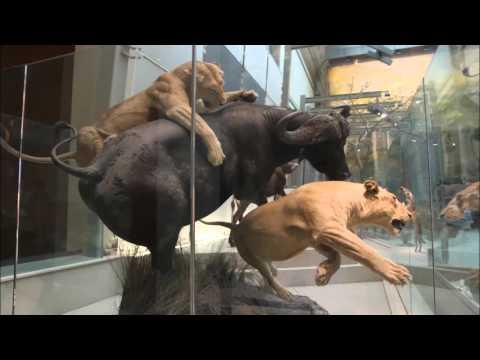 Foto's van het National Museum of Natural History, Washington DC