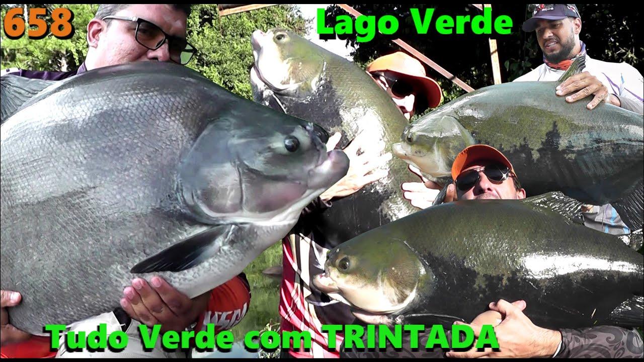 Invasão Verde e Trintada no Clube de Pesca Lago Verde - Programa Fishingtur na TV 658