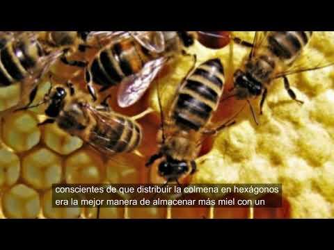 matemáticas-en-el-panal-de-abejas.