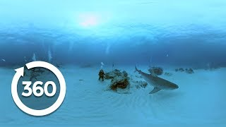 Understanding Sharks | Shark Week (360 Video) thumbnail