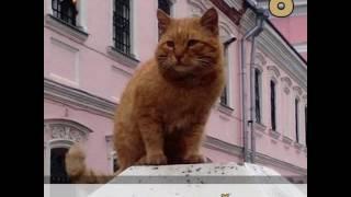 Самые популярные интернет-коты 2016