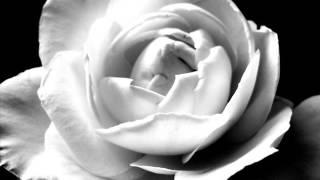 Народна песен / Бяла роза - с текст