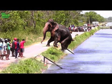 Faith in Humanity restored. An elephant stucked by a canal saved by humans en streaming
