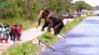 Faith in Humanity restored. An elephant stucked by a canal saved by humans
