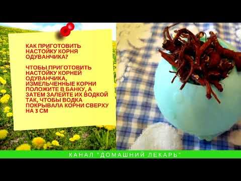 Настойка корня одуванчика: очищает печень и создает кровь - Домашний лекарь - выпуск №71