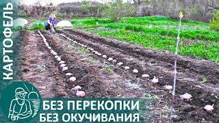 🌿 Посадка картофеля без перекопки и окучивания | Выращивание картофеля по технологии Гордеевых