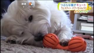 HTB「イチオシ!ペットモーニング」2017.1.17放送.