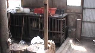 В Самаре мигранты отлавливали собак на мясо