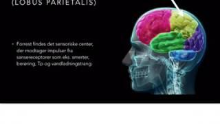 Nervesystemet, kort