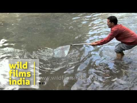 Trout Fishing In Verinag, India