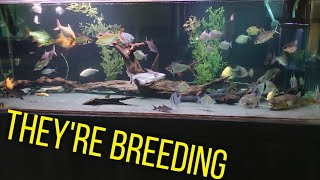 They are breeding EVERYWHERE at Ohio Fish Rescue