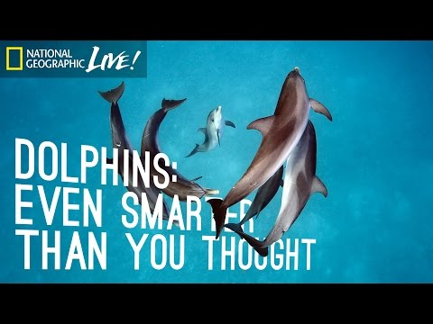 Dolphins: Even Smarter Than You Thought | Nat Geo Live