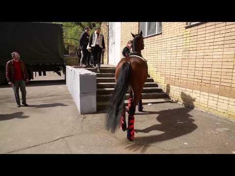 Погрузка лошадей