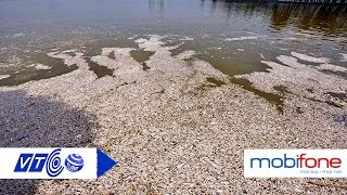 Hé lộ nguyên nhân cá chết trắng Hồ Tây | VTC