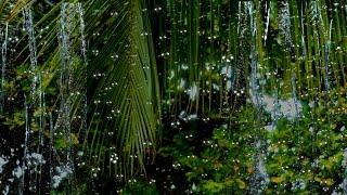 Regen -  Geräusch von Regen - Entspannen