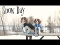Dogs Playing in the Snow | Post Snow Storm | Herky & Puppy Milton Cavalier King Charles