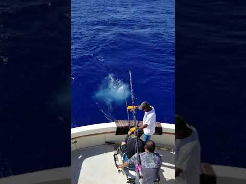 Wild Bunch Fishing Charters Oahu Island Hawaii