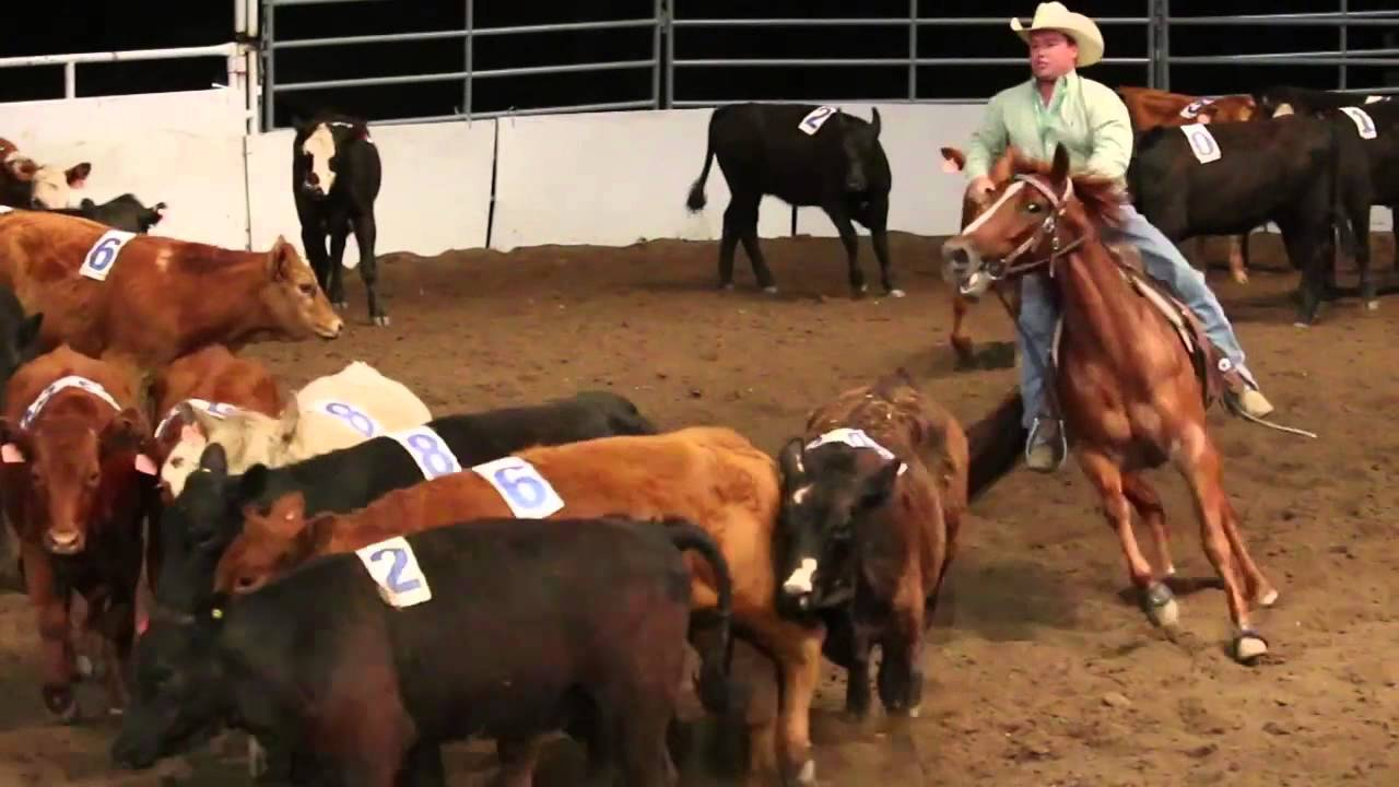 Team Cattle Penning Calgary Stampede 2014 Youtube