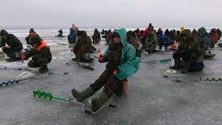 ПОЛОСАТЫЕ ЗАГИБАЮТ УДОЧКИ Зимняя рыбалка 2018 2019 Раздача КРУПНОГО Окуня в БАЗАРЕ